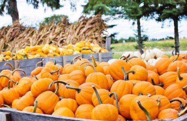 5 alimentos de otoño perfectos para deportistas