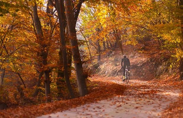 Consejos para aumentar tus defensas en otoño