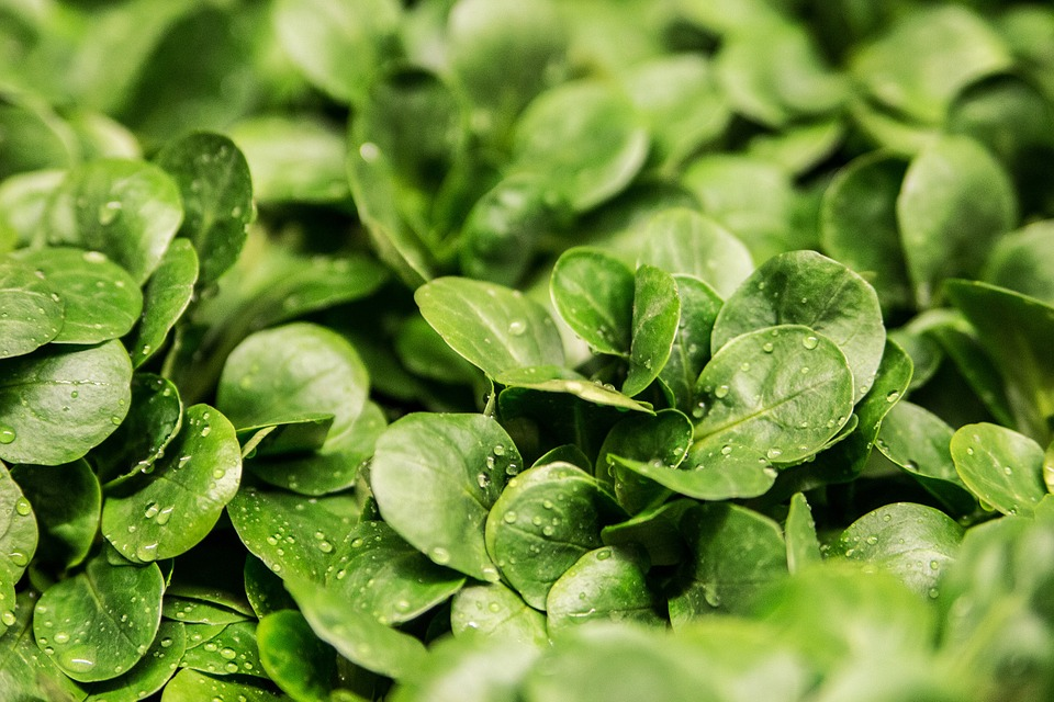 ensalada verde para combatir estrés