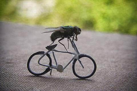 insectos bici