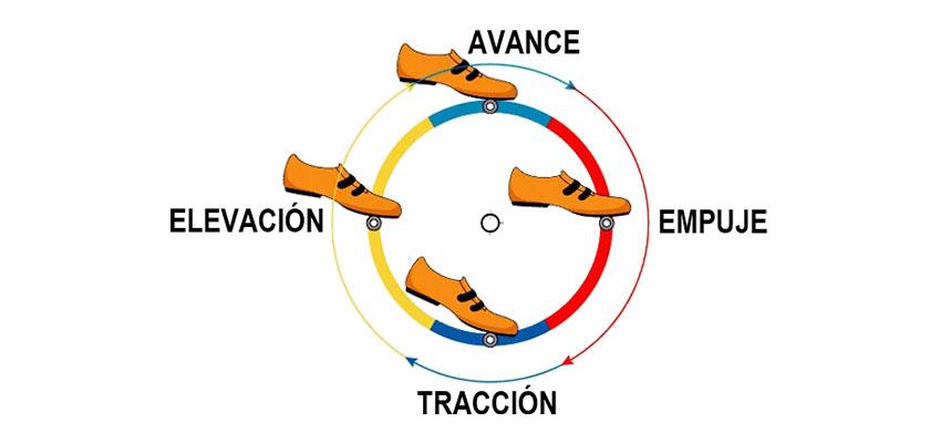 fases del pedaleo