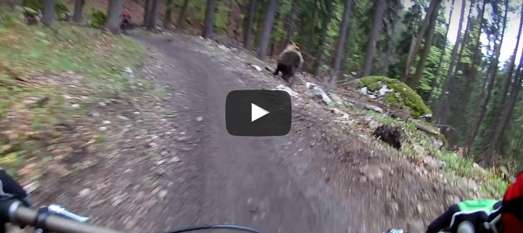 Un oso persigue a dos ciclistas en un bikepark eslovaco [VÍDEO]